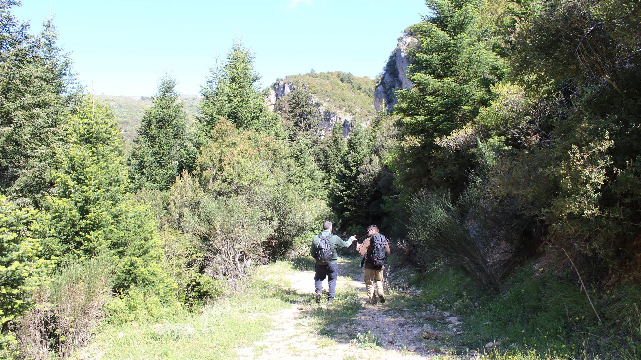 Trekking to the walnut trees of Vamvakou