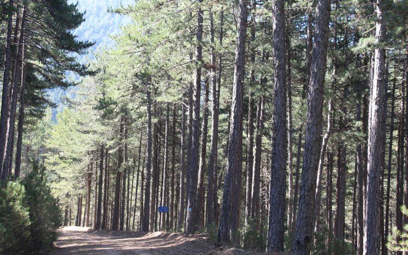 Ποδηλασία στα Μονοπάτια της Βαμβακούς
