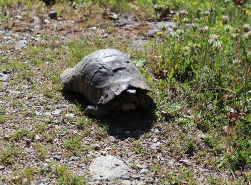 Turtles… the descendants of dinosaurs